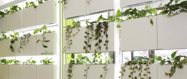 Un separador de ambientes nico cortina vegetal de - Cortinas separadoras de ambientes ...